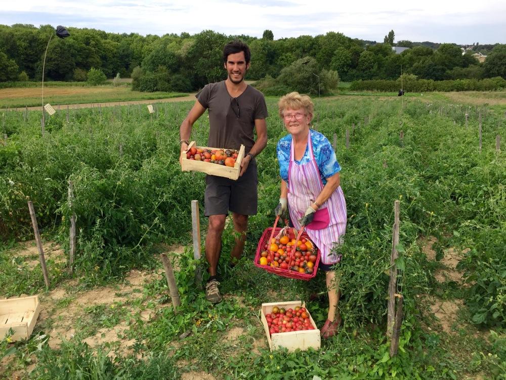 Tomates de plein champ, notre spécialité