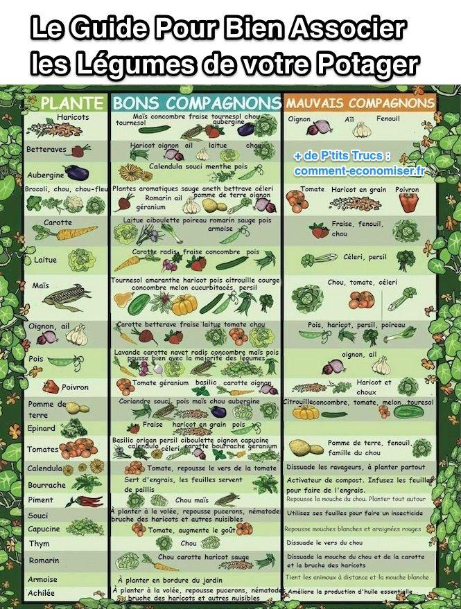 compagnonnage-plantes-cultures-associees