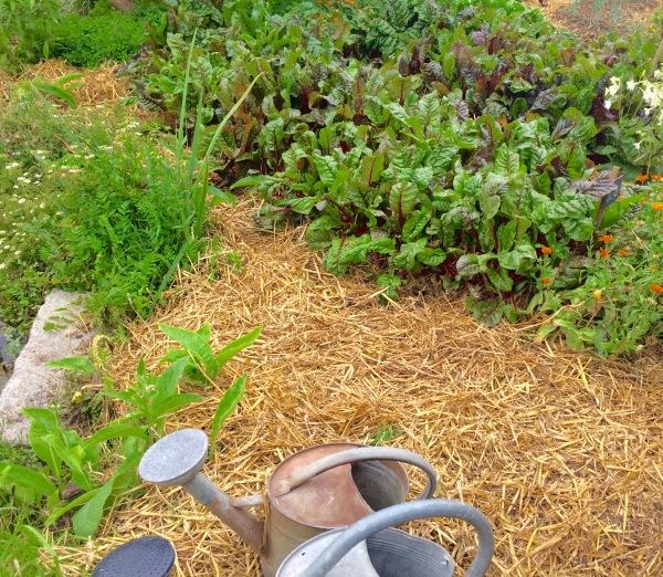 Carré en permaculture - Bec Hellouin - Le Maraîcher Gourmand